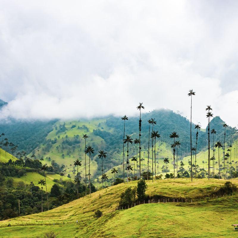 Platos típicos de la región Amazónica: tradición y diversidad
